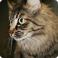 Adopt A Pet :: Calvin - Howell, NJ