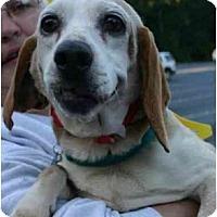Adopt A Pet :: Essie - Portland, OR