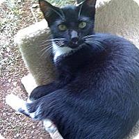 Adopt A Pet :: HollyLeaf - Monroe, GA