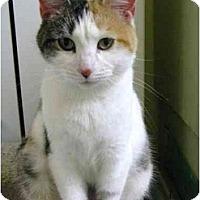 Adopt A Pet :: Wanda - Markham, ON