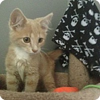 Adopt A Pet :: Rossi - Monroe, GA
