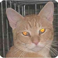 Adopt A Pet :: Pickles - Lombard, IL