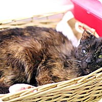 Adopt A Pet :: Aggie - Chicago, IL