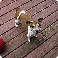Adopt A Pet :: Dorthea - Wisconsin Dells, WI