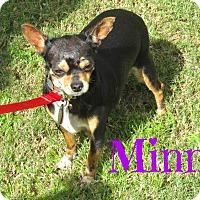 Adopt A Pet :: Minni - Scottsdale, AZ