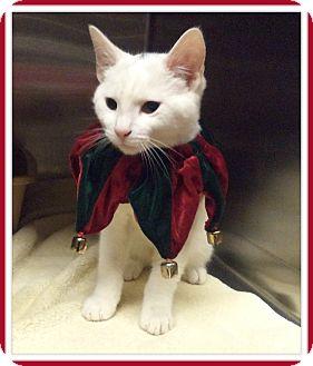 Domestic Shorthair Cat for adoption in Marietta, Georgia - PETER