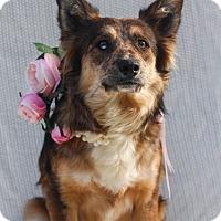 Adopt A Pet :: Hazel - Auburn, CA