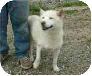Siberian Husky/German Shepherd Dog Mix Dog for adoption in Makinen, Minnesota - Tasha