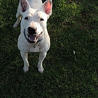 Adopt A Pet :: Buddy - Denver City, TX