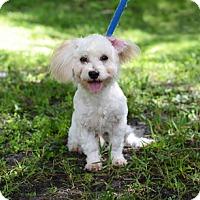 Adopt A Pet :: Tyler - Jupiter, FL