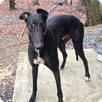 Adopt A Pet :: PJ Father Dave - Gerrardstown, WV