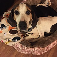 Adopt A Pet :: Addie: Covington - Cincinnati, OH