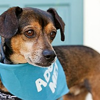 Adopt A Pet :: Crash - Pacific Grove, CA