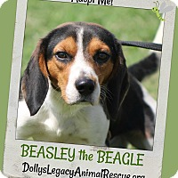 Adopt A Pet :: BEASLEY - Lincoln, NE