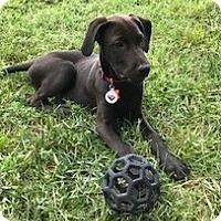 Adopt A Pet :: Timone - Holly Springs, NC