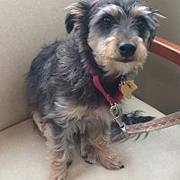 Adopt A Pet :: Mario - Oak Ridge, NJ