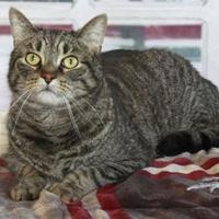Adopt A Pet :: Joyme - Bristol, IN