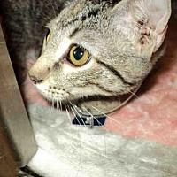 Adopt A Pet :: VICTORIA - Olivette, MO