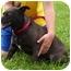 Photo 2 - Labrador Retriever/Shepherd (Unknown Type) Mix Dog for adoption in Somerset, Pennsylvania - Mia