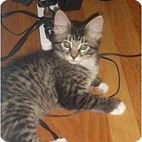 Adopt A Pet :: Cecilia - Davis, CA