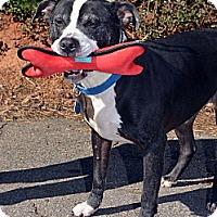 Adopt A Pet :: Lucky - Atlanta, GA