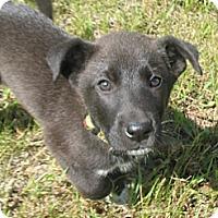 Adopt A Pet :: Chuck - Egremont, AB