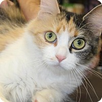 Adopt A Pet :: Debra - Hamilton, ON