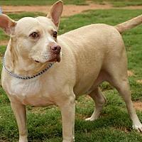 Adopt A Pet :: Cooper - Newnan, GA
