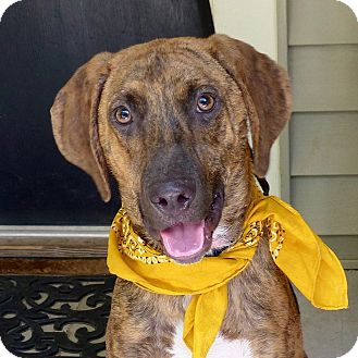 Hound (Unknown Type) Mix Dog for adoption in Baton Rouge, Louisiana - Cap