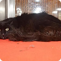 Adopt A Pet :: *O''KEY - Sacramento, CA