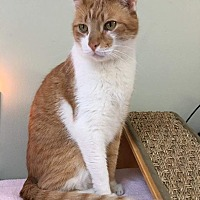 Adopt A Pet :: PEACHES - Hamilton, NJ
