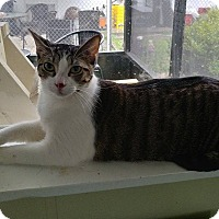 Adopt A Pet :: Rodney - Umatilla, FL