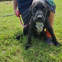 Adopt A Pet :: Bonnie - Weatherford, TX