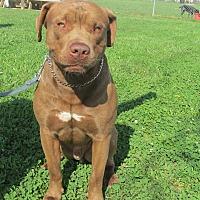 Adopt A Pet :: MEATBALL - LaGrange, KY