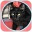 Photo 1 - Domestic Mediumhair Kitten for adoption in Alden, Iowa - Uhuru