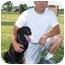 Photo 3 - Labrador Retriever Mix Dog for adoption in kennebunkport, Maine - Stormy-ADOPTED!