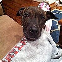 Adopt A Pet :: Willow - Clarksburg, MD