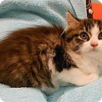 Adopt A Pet :: Alec - Reston, VA