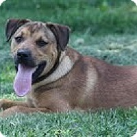 Adopt A Pet :: Ruby Red ($250) - Staunton, VA