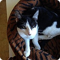 Adopt A Pet :: Shelley - Mobile, AL