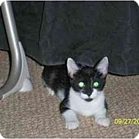 Adopt A Pet :: Tizzy - Port Republic, MD