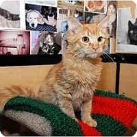 Adopt A Pet :: Harry - Farmingdale, NY