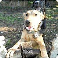 Adopt A Pet :: Ziggy - Geismar, LA
