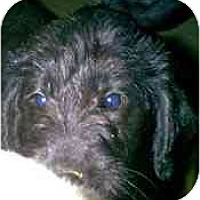 Adopt A Pet :: Columbus - dewey, AZ