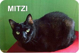 Domestic Shorthair Cat for adoption in Medway, Massachusetts - Mitzi