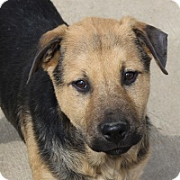 Adopt A Pet :: Will - in Maine - kennebunkport, ME
