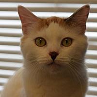 Adopt A Pet :: Chloe - DFW Metroplex, TX