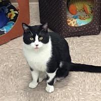 Adopt A Pet :: Spunky - Byron Center, MI
