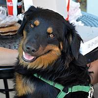 Adopt A Pet :: JD Salinger - Indianapolis, IN