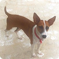 Adopt A Pet :: Jackie - Erin, ON